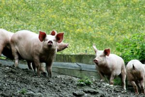 California Meat Processing Progress: Time for Change!